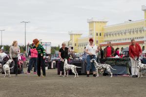 Miljoona Koira 2022 -tapahtuma Tuurin Kyläkaupalla 11.-12.6.2022